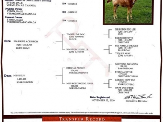 Timberlind Auctions Online Timed Reining & Riding Prospect Colt Sale