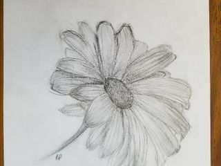 Delicate Daisy  by Peyton Smith  Grade 7  Pencil