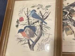 Vintage bird collection pictures  Set 5