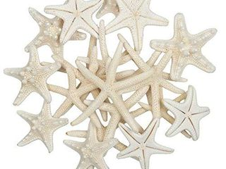 Jangostor 20 PCS 2 6 Inch Starfish Mixed Ocean Beach Starfish Natural Colorful Seashells Starfish Perfect for Wedding Decor Beach Theme Party  Home Decorations DIY Crafts  Fish Tank