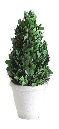 Creative Co op 11  Preserved Boxwood Cone Shaped Clay Pot Topiary  Medium  Green DA5562