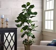 5 ft Faux Fiddle leaf Tree in Starter Pot Valerie