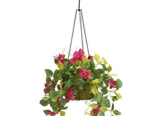 National Tree Company 9  Bougainvillea Plant Hanging Basket