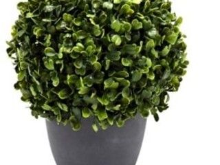 Bee   Willow Homme 8 6in Boxwood Artificial Topiary in cement pot