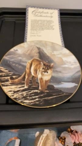 THE COUGAR   PlATE BY CHARlES FRACE  KNOWlES