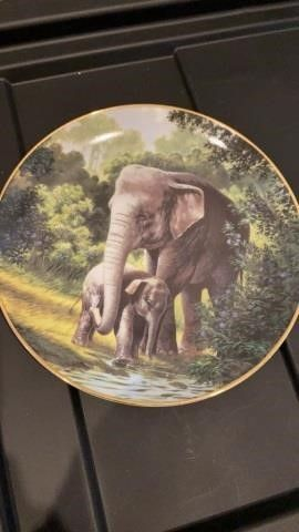 THE ASIAN ElEPHANT BY WIll NElSON PlATE BY