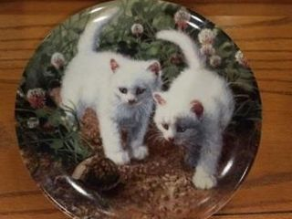 A CHANCE MEETING  WHITE AMERICAN SHORTHAIRS  BY