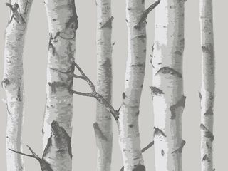 NuWallpaper NU1694 Mountain Birch Grey Peel