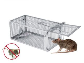 large live Rat Trap Retail   27 59