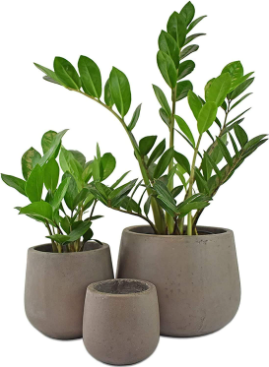 Two Cement Planters
