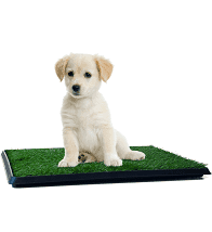 Petmaker 3 Piece Dog Relief System