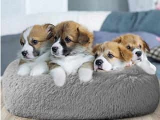 SOFT GREY DOG DONUT BED