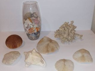 lot Of 8 Dried Ocean Decorations And Shells   Vase Filled With Assorted Dried Ocean Decorations And Shells