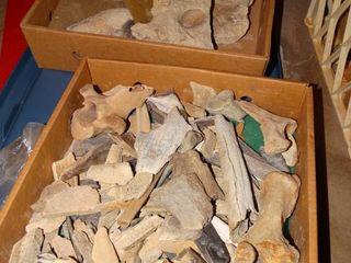 Rock   bones collection