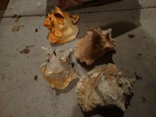large lot of assorted sea shells