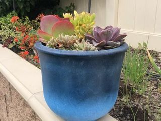 Durx litecrete lightweight Concrete Vibrant Ombre Tulip Blue Planter large   Retail 131 99