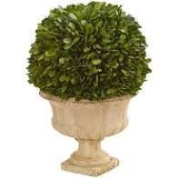 12 in boxwood topiary ball preserved plant