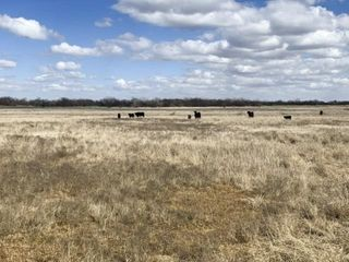 4/21 | 160 +/- Acres | Good Sm. Grain/Livestock Land