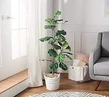 4  Faux Fiddle leaf Tree in Starter Pot by Valerie