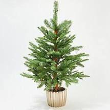 Martha Stewart 36 in Downswept Green Potted Tree Pearl Tree Clear