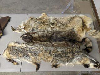 Misc  Furs