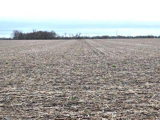 Fulton County, IL Land Auction - Kellogg Trust